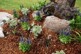 Garden Bed with Mulch.jpg