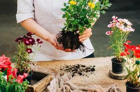 bigstock-Gardener-Doing-Gardening-Work--135218315.jpg