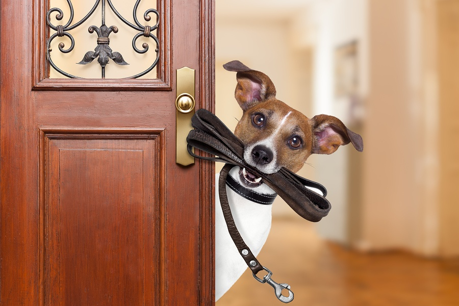bigstock-Dog-Leash-Walk-165247520.jpg