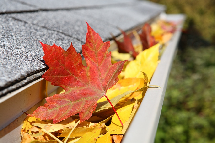 bigstock-Rain-Gutter-Full-Of-Leaves-4222402.jpg
