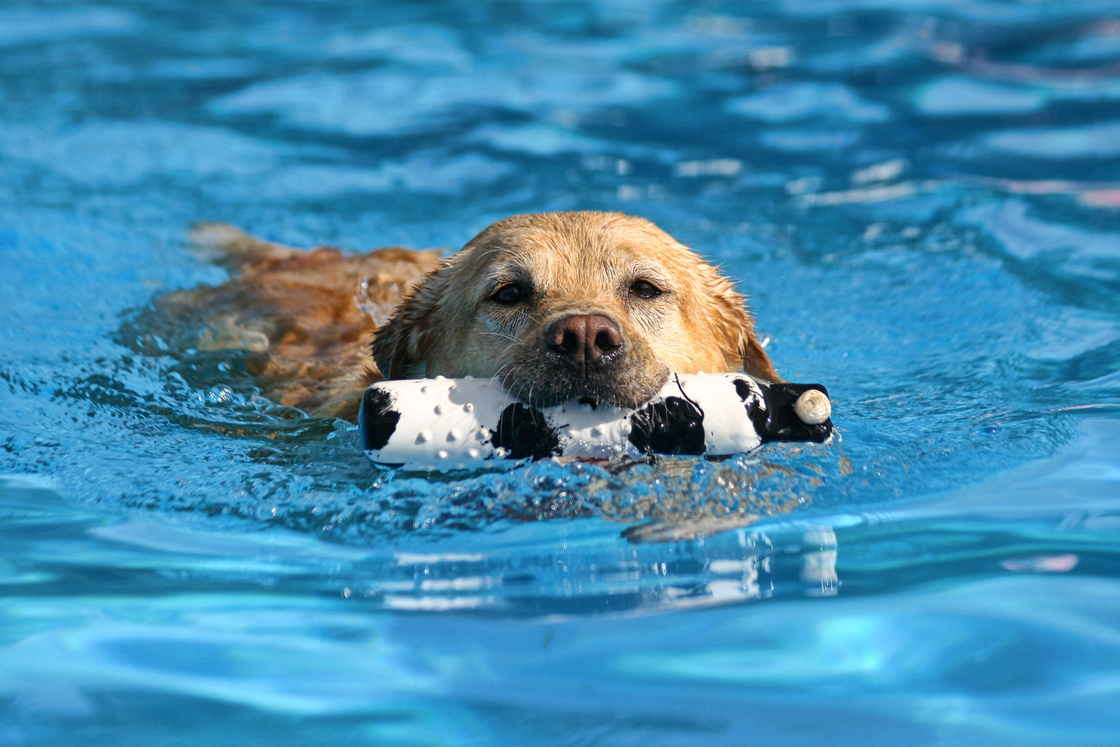 bigstock-dog-at-a-pool-19387085.jpg